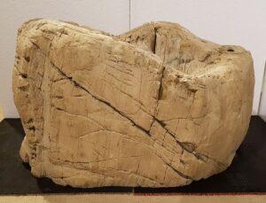 Memorial stone petrified wood 25163
