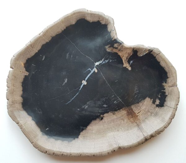 Piatti legno pietrificato 27806