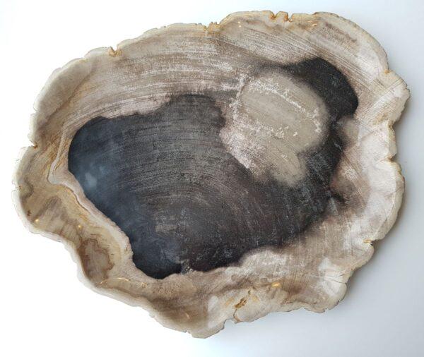 Piatti legno pietrificato 27829