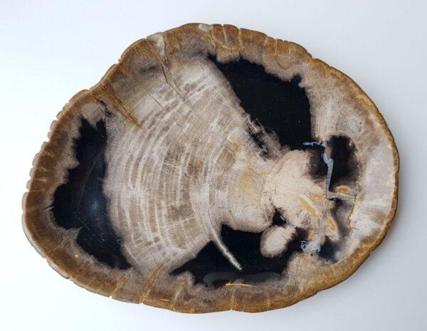 Piatti legno pietrificato 28159