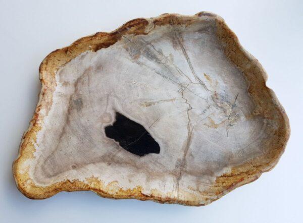 Piatti legno pietrificato 29412