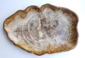 Piatti legno pietrificato 29413