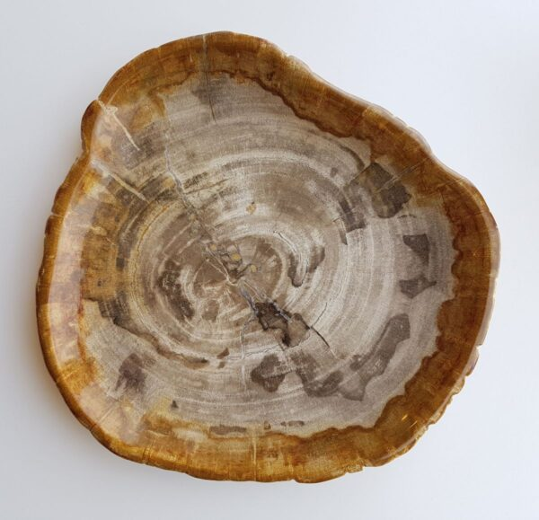 Piatti legno pietrificato 29416