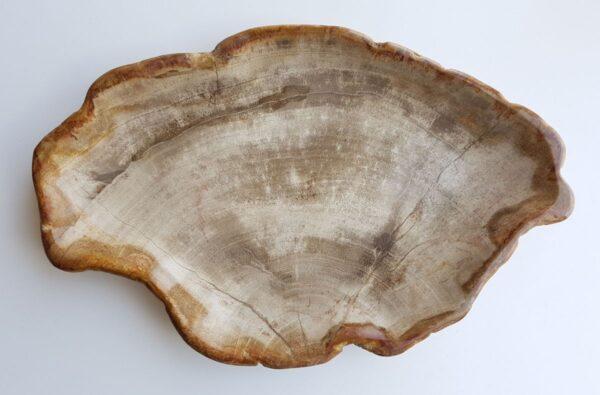 Piatti legno pietrificato 29441