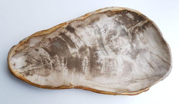 Piatti legno pietrificato 29459