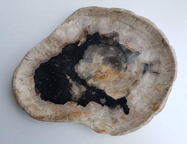 Piatti legno pietrificato 29514