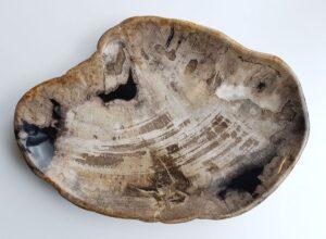 Piatti legno pietrificato 29516