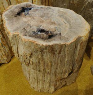 Tavoli laterali legno pietrificato 16195