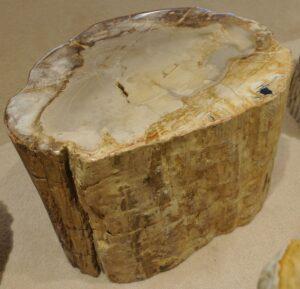 Tavoli laterali legno pietrificato 17237