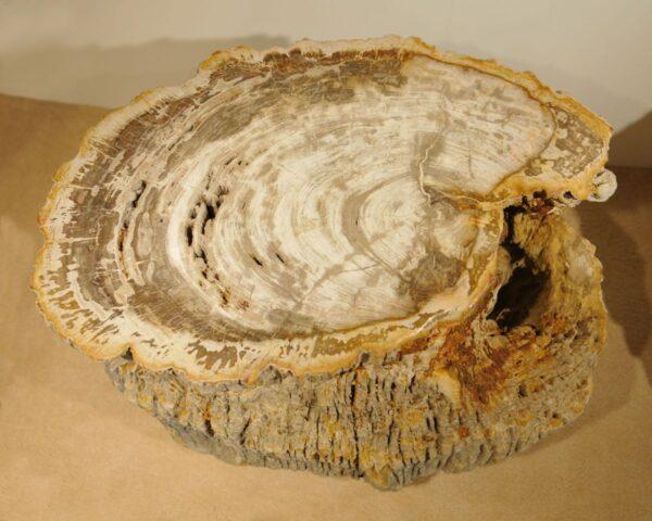 Tavoli laterali legno pietrificato 20403