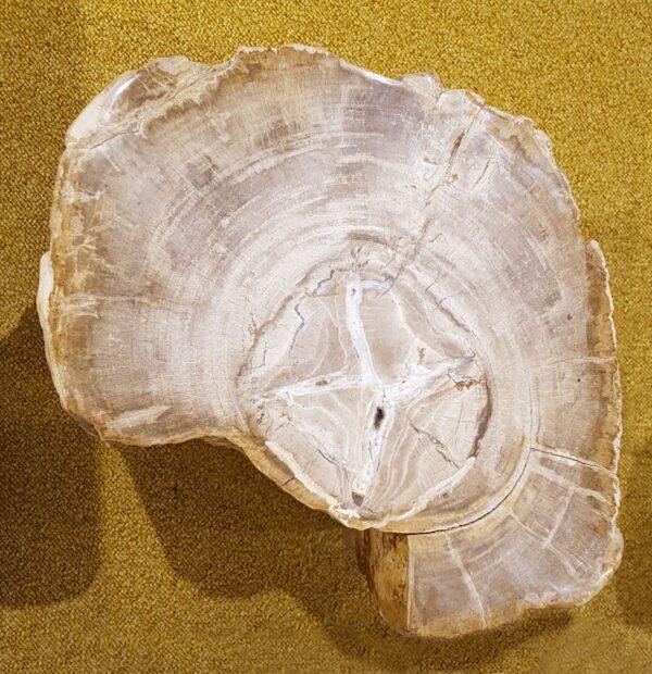 Tavoli laterali legno pietrificato 25014