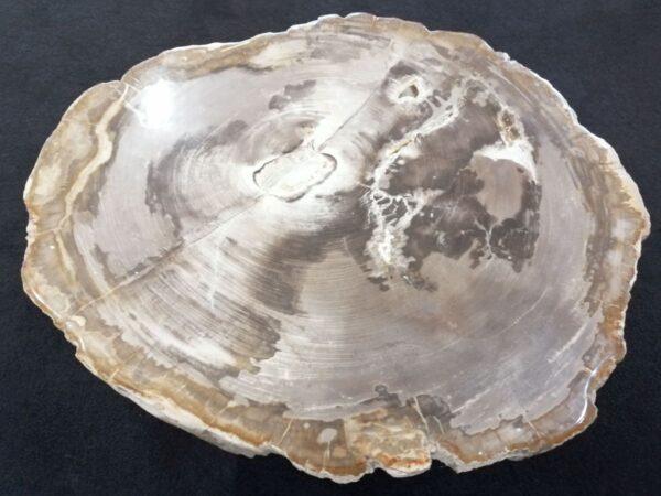Tavolino legno pietrificato 31143