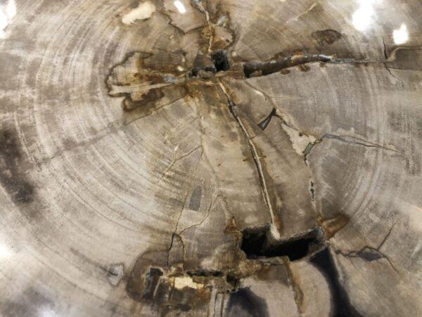 Coffee table petrified wood 31154