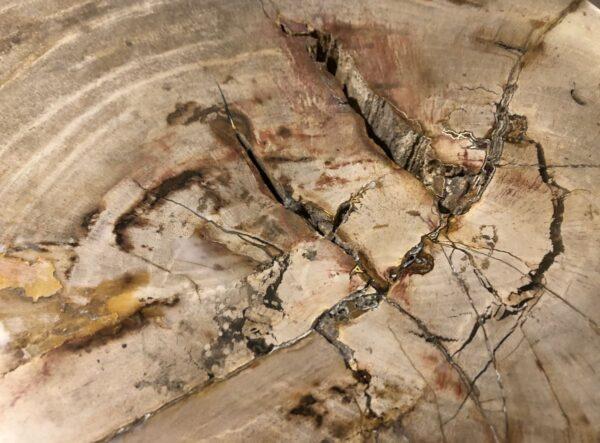 Beistelltisch versteinertes Holz 29000