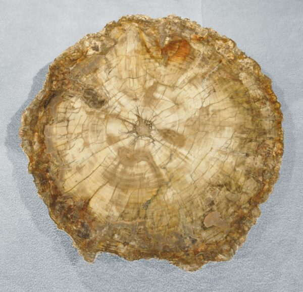 Versteinertes Holz aus Madagaskar 4014