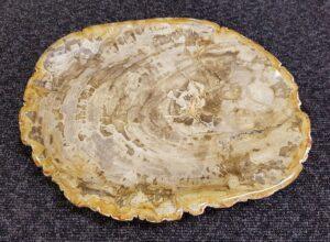 Teller versteinertes Holz 22097