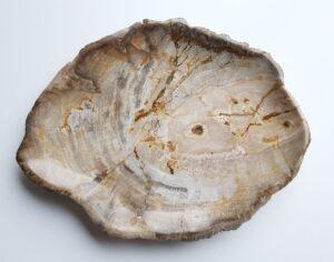 Teller versteinertes Holz 28321