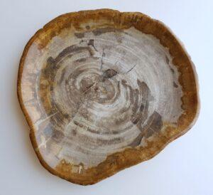 Teller versteinertes Holz 29417