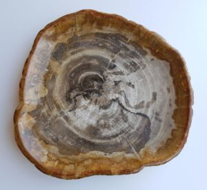 Teller versteinertes Holz 29419