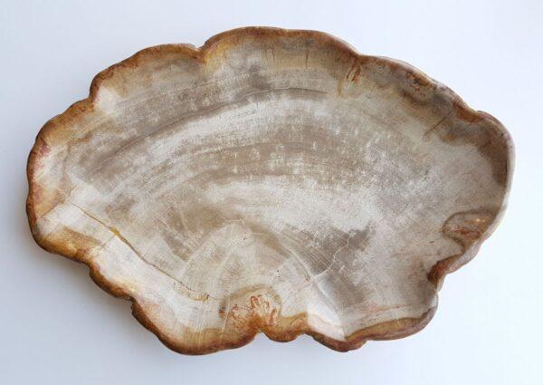 Teller versteinertes Holz 29440