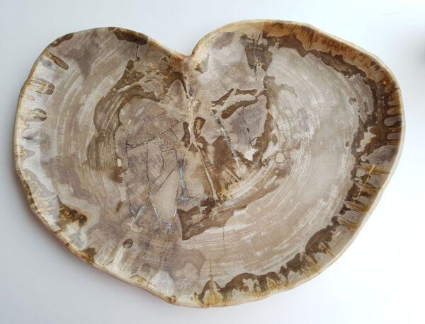 Teller versteinertes Holz 29560