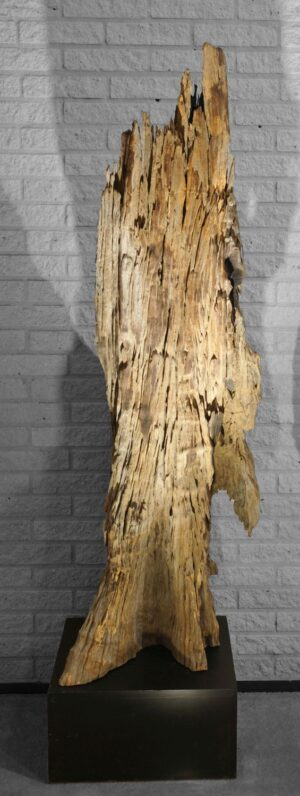 Driftwood 11530