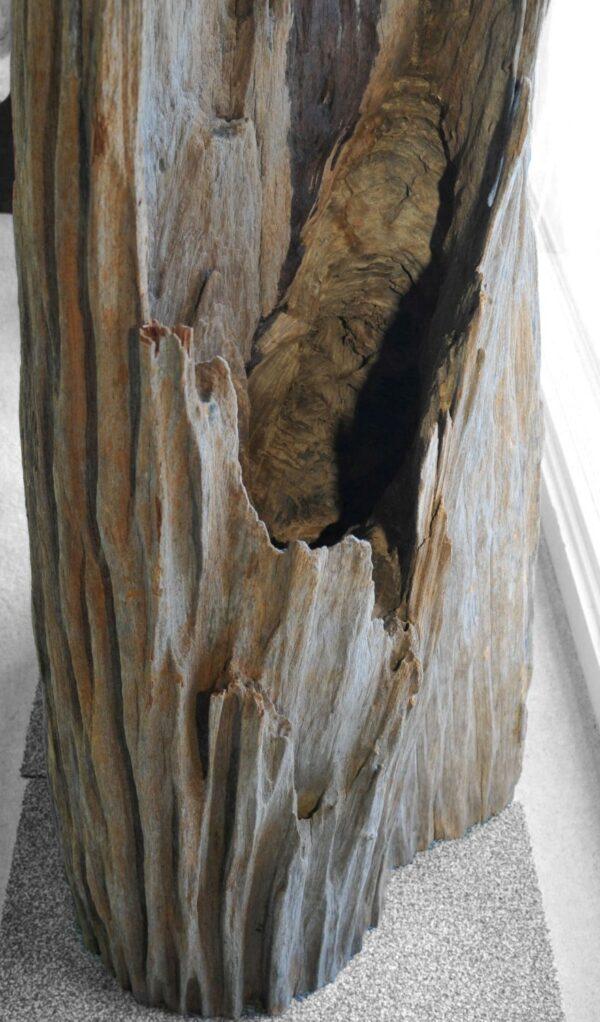 Driftwood 11561