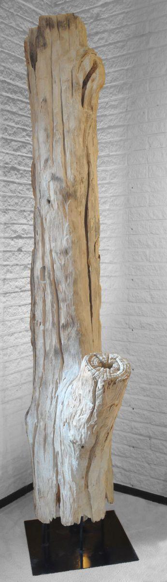Driftwood 11598