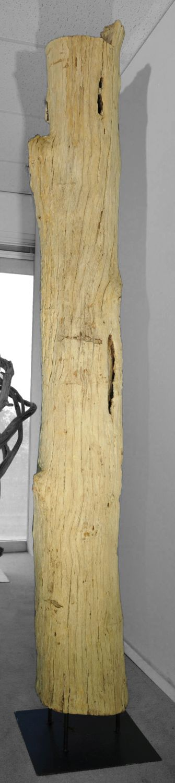 Driftwood 12772
