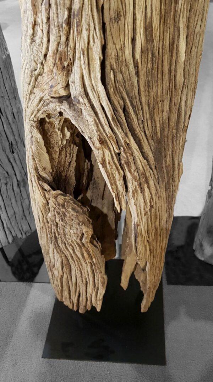 Driftwood 12779