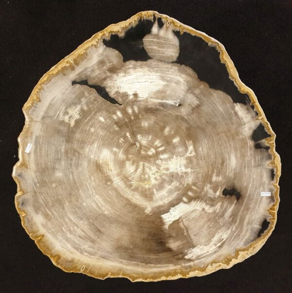 Coffee table petrified wood 32229