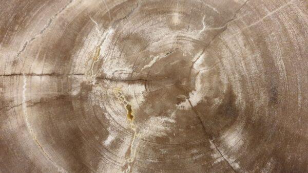 Coffee table petrified wood 32233