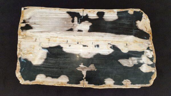 Coffee table petrified wood 32281