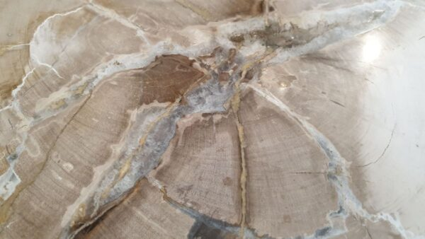 Coffee table petrified wood 32294