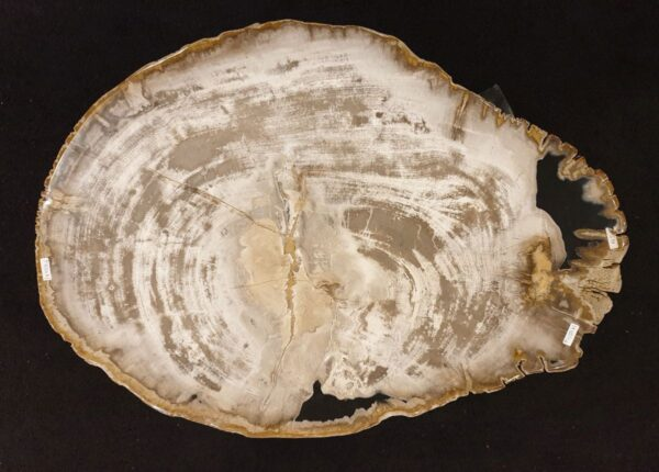 Coffee table petrified wood 32297