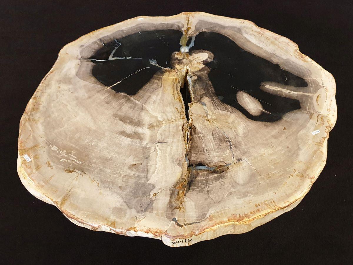 Coffee table petrified wood 32330