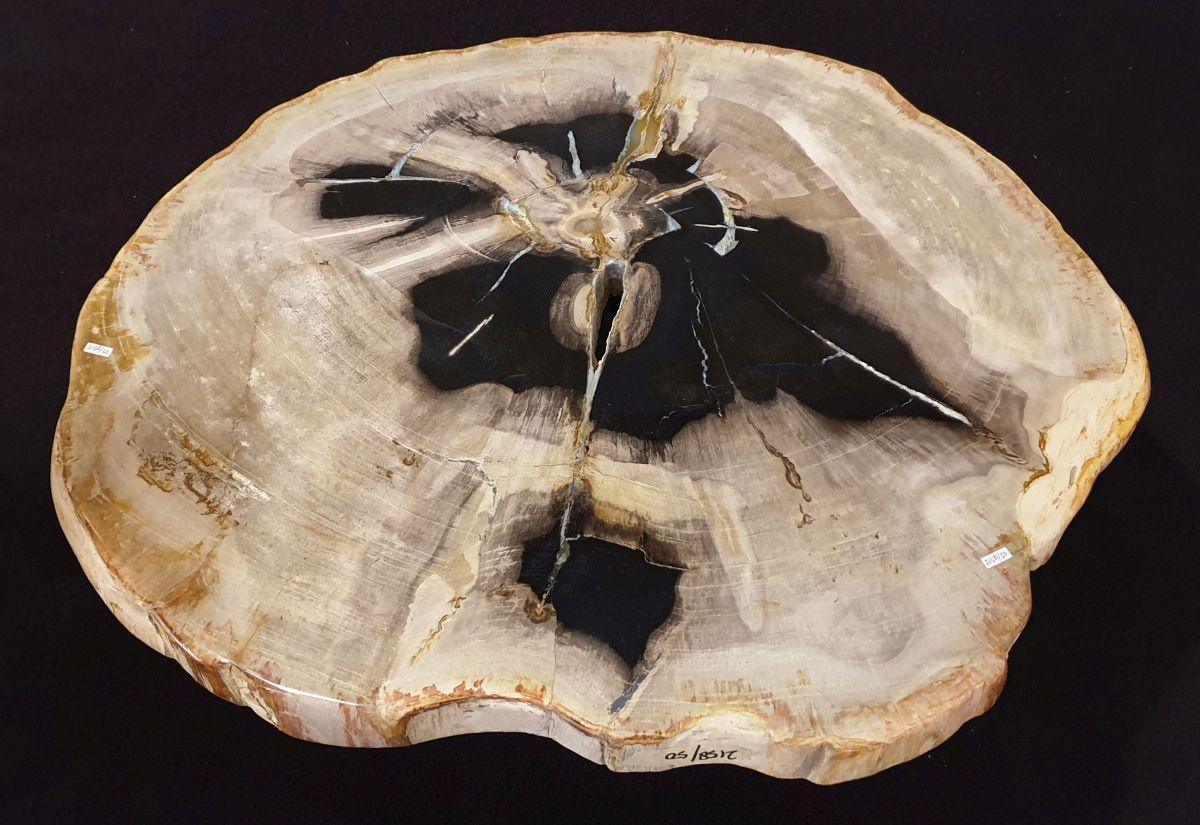 Coffee table petrified wood 32334
