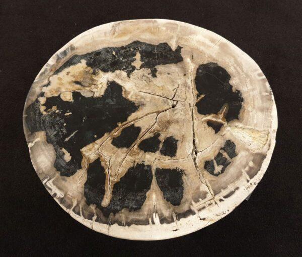 Coffee table petrified wood 32429