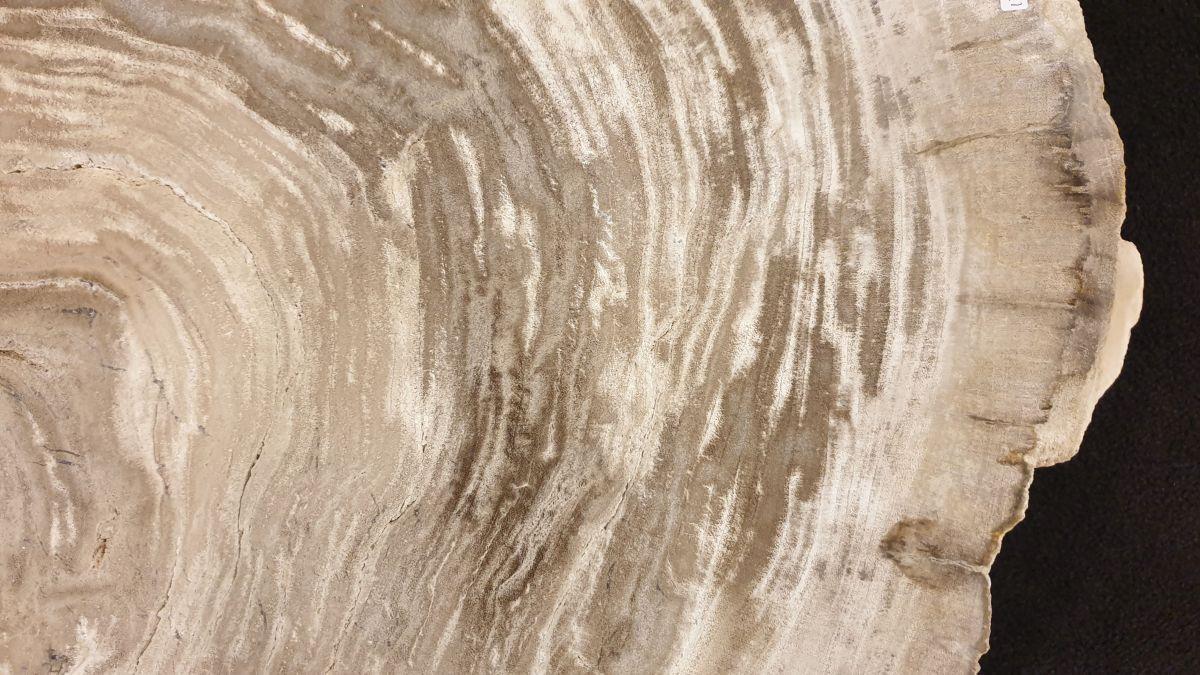 Couchtisch versteinertes Holz 32185
