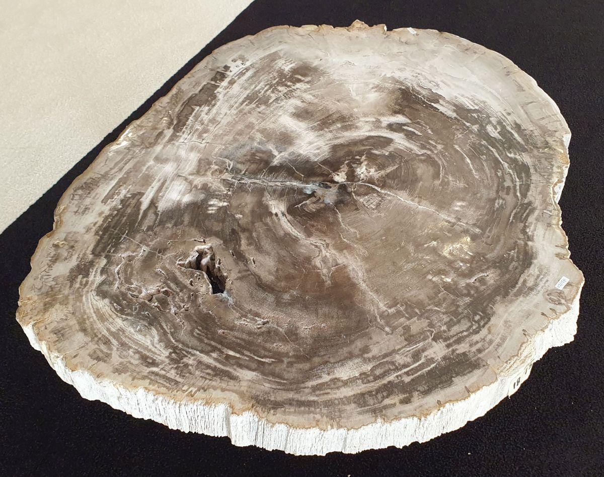 Couchtisch versteinertes Holz 32202