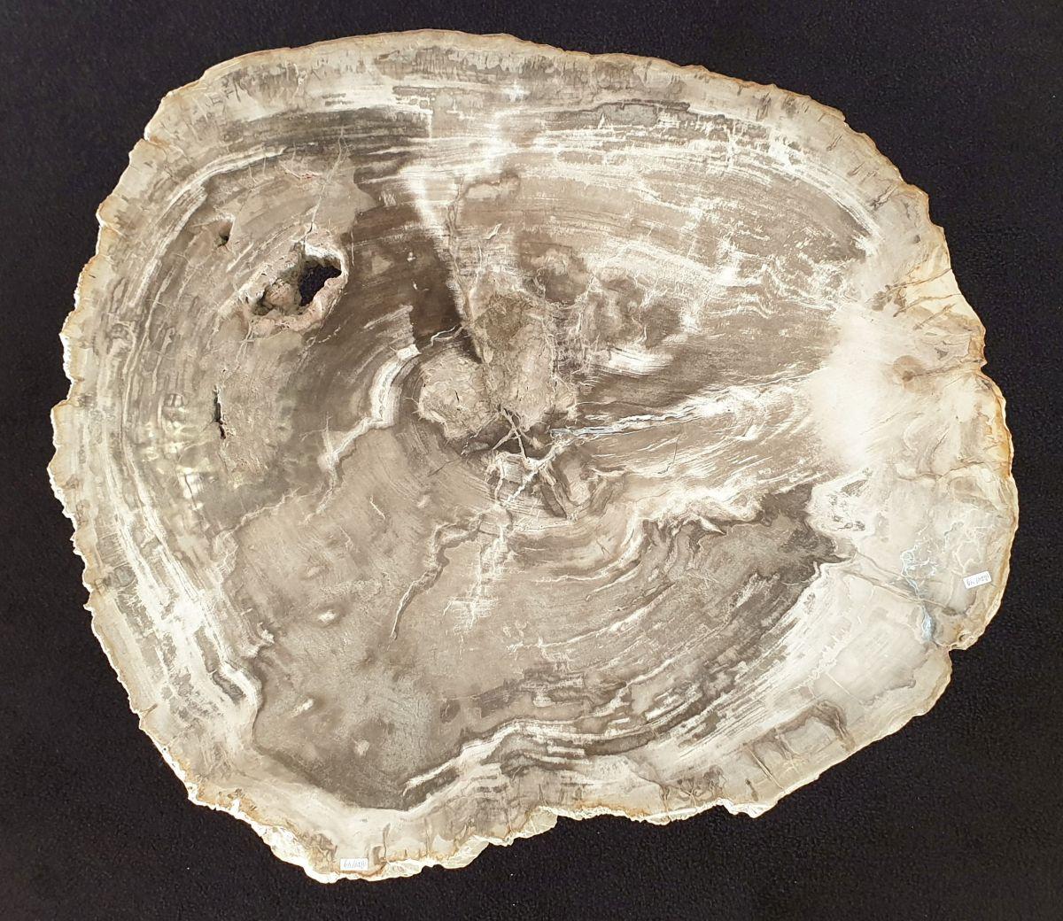 Couchtisch versteinertes Holz 32205