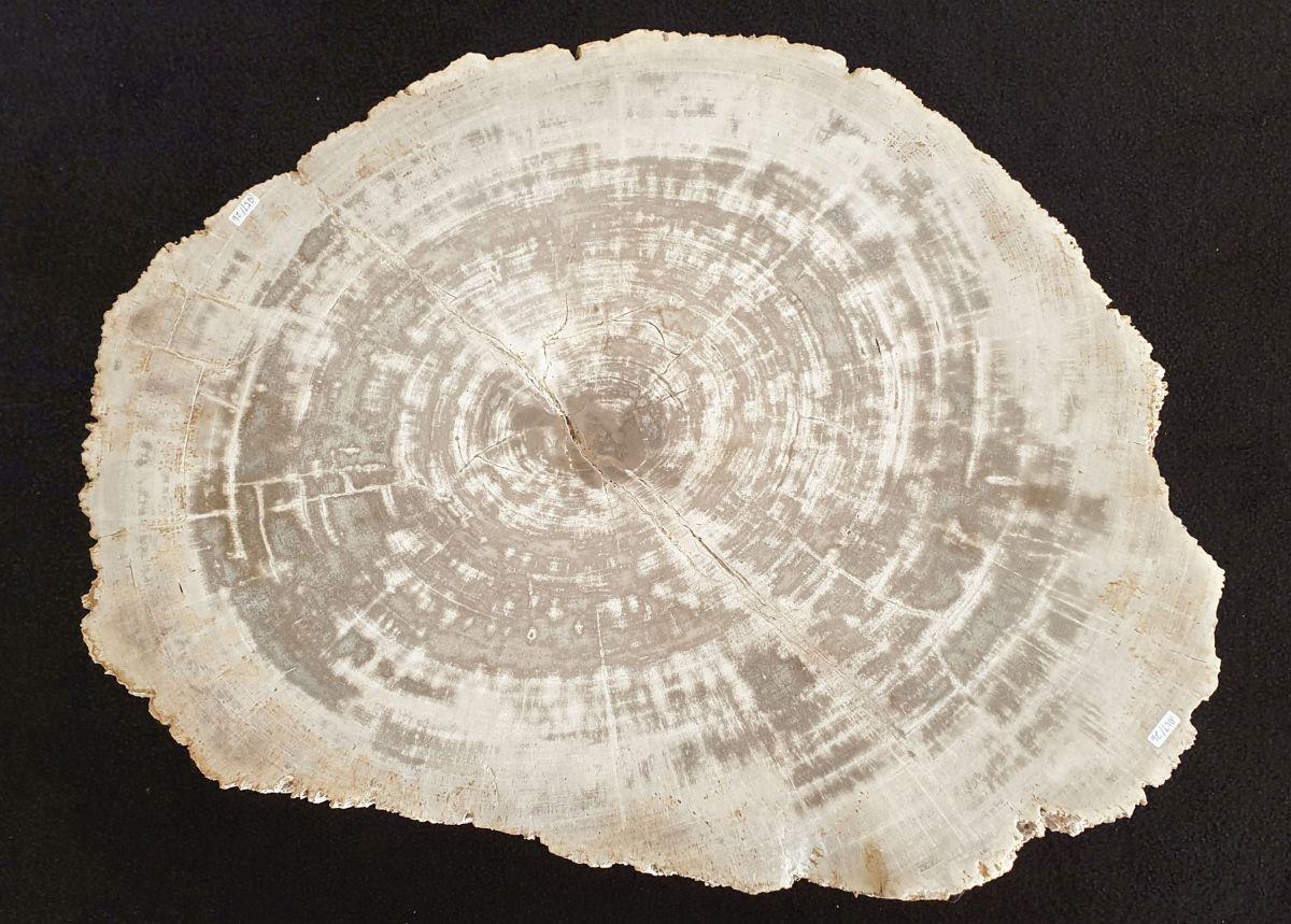 Couchtisch versteinertes Holz 32226