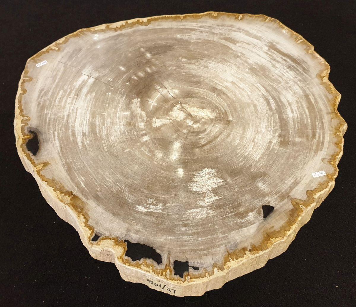 Couchtisch versteinertes Holz 32231