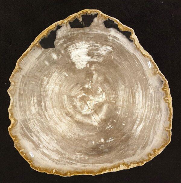 Couchtisch versteinertes Holz 32233