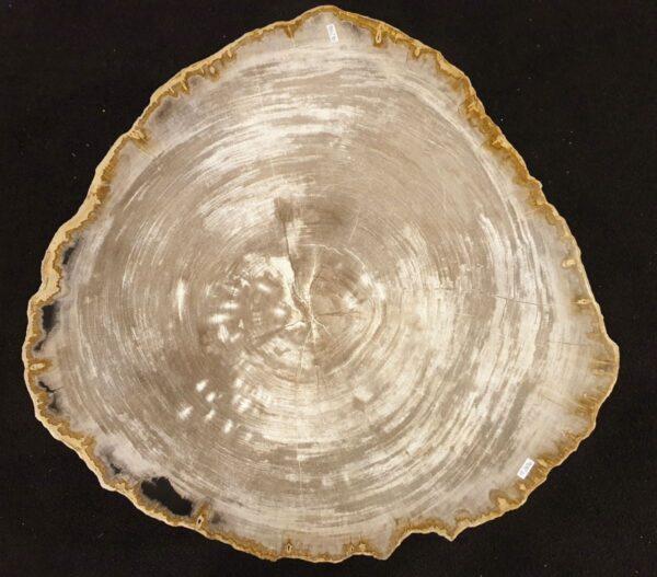 Couchtisch versteinertes Holz 32234