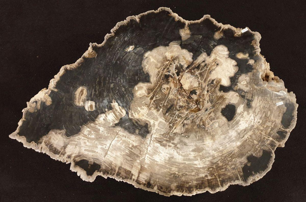 Couchtisch versteinertes Holz 32238