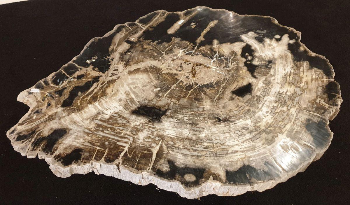 Couchtisch versteinertes Holz 32240
