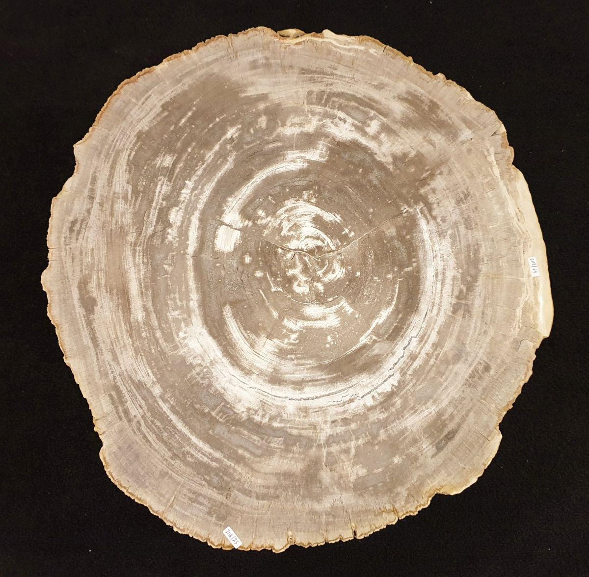 Couchtisch versteinertes Holz 32273