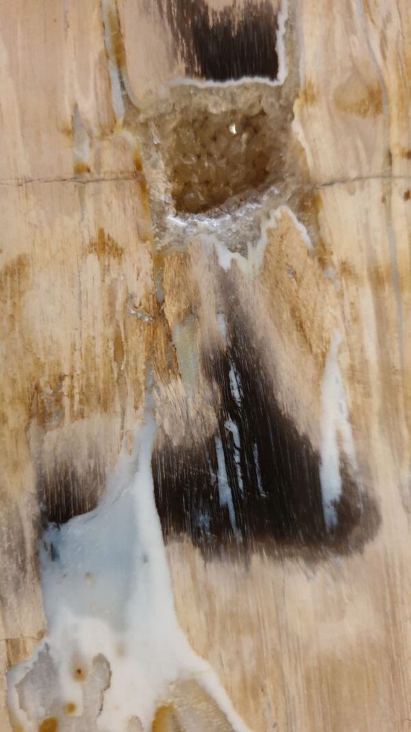 Couchtisch versteinertes Holz 32282