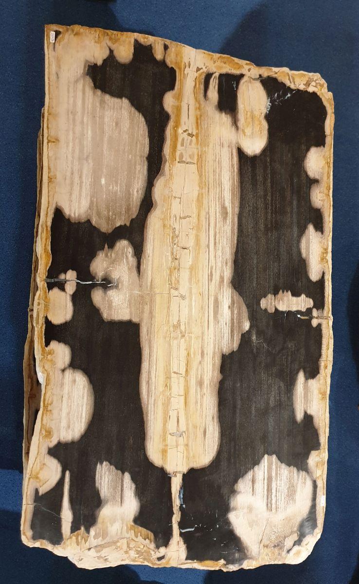 Couchtisch versteinertes Holz 32283